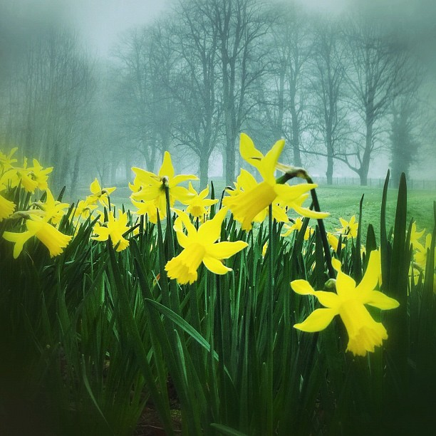 Happy St. Daffs Day