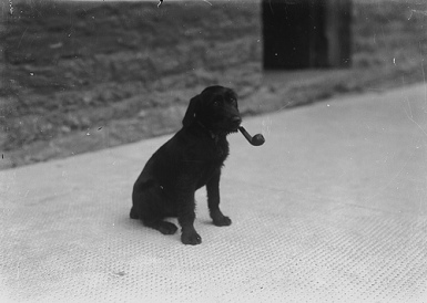 Dog with a pipe in its mouth