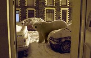 Ice age Rhondda